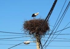 Poppet in the nest Stock Image