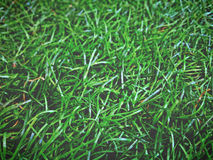 Plastic grass Royalty Free Stock Photos