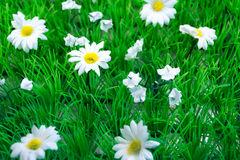 Plastic Grass and Flowers (2) Royalty Free Stock Photography