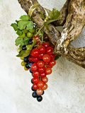Plastic green blue and red grape Royalty Free Stock Photography