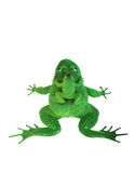Plastic green frog toy Stock Photo