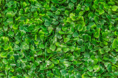 Plastic green grass Royalty Free Stock Photo
