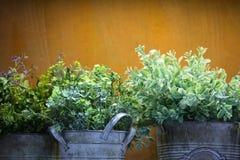 Plastic green plants Royalty Free Stock Photos