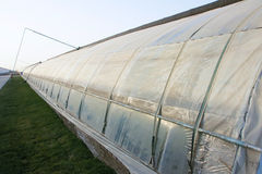Plastic greenhouse Royalty Free Stock Photo