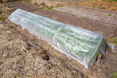 Plastic greenhouse. Royalty Free Stock Photo