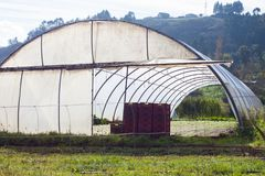 Plastic greenhouse for growing organic vegetables in Asturias. Spain Royalty Free Stock Image