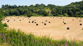 Plastic Hay Bales Royalty Free Stock Photo