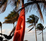 Plastic Kayak Resting Against Palm Tree In Cuba Royalty Free Stock Photo