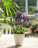 Plastic lavender flowers. In flowerpot on dining table Royalty Free Stock Photos