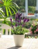Plastic lavender flowers Royalty Free Stock Photos