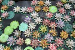 Plastic lotuses Royalty Free Stock Image