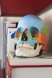 Plastic medical skull. A plastic skull for medicine students on a shelf containing books and notebooks Stock Image