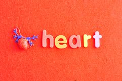 A plastic model of a human heart with the word heart. On a red background stock images