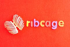 A plastic model of a human ribcage with the word ribcage. On a red background Stock Photo