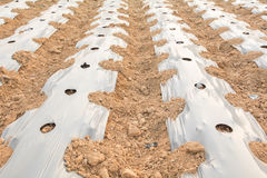 Plastic mulching Royalty Free Stock Images