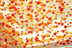 Plastic opgeschorte ballen Stock Foto's