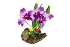 Plastic orchid on wood. Isolate on white background Stock Image