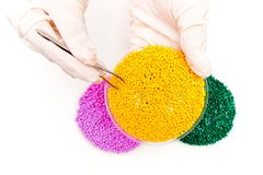 Plastic pellets . Colorant for polymers . granules. Plastic pellets in the hands with gloves and tweezers. Plastic pellets . Colorant for polymers in granules stock photography