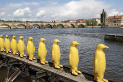 Plastic penguins on shore. Of the Vltava river Stock Images