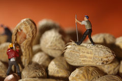 Plastic People Working on Peanuts. Miniature Fake People Working on Peanuts Stock Image