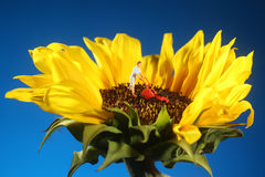 Plastic Person Mowing Grass on a Sunflower. Miniature Plastic Person Mowing Grass on a Sunflower Royalty Free Stock Photography