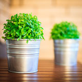 Plastic plant in pot Royalty Free Stock Photo