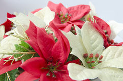 Plastic Poinsettia Stock Photo
