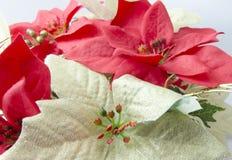 Plastic Poinsettia Stock Image