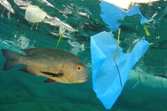Free Plastic Pollutes The Sea With Fish Stock Photo - 189061150