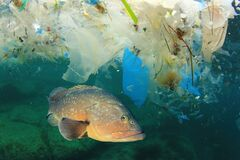 Free Plastic Pollutes The Sea With Fish Stock Image - 189061161