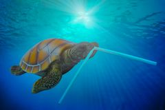 Plastic Pollution In Ocean Environmental Problem. Turtles Can Eat Plastic Tube Mistaking Them For Food. Travel Trips Recreation Stock Image