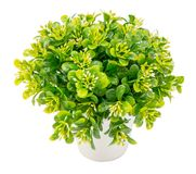 Plastic Pot plant bush tree Isolated on White Background with cl Royalty Free Stock Image