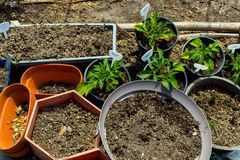 Plastic pots filled with dirt Royalty Free Stock Images