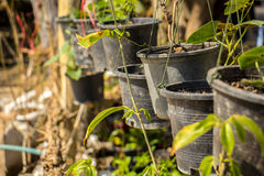 Plastic pots, hanging, growing, black, sort, vegetables. Royalty Free Stock Images