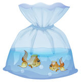 A plastic pouch with two fishes Royalty Free Stock Photography