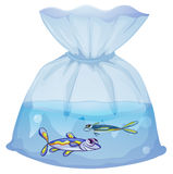 A plastic pouch with two fishes vector illustration