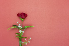 plastic rose flower on red paper background. Stock Photography