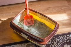 Plastic scoop in a cat litter box, standing on a floor. stock images