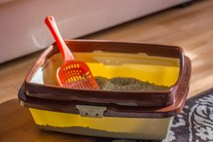 Plastic scoop in a cat litter box, standing on a floor. stock photo