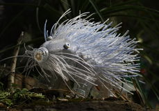 Plastic sculptures Pet Art. Sculptures of a crested porcupine made of plastic bottles made by Veronika Richterova. Sculptures are installed as a part of plants Royalty Free Stock Images