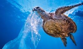 Sea turtle underwater on blue water background