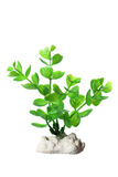 Plastic Seaweed Stock Photography