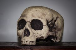 Plastic Skull Royalty Free Stock Photography
