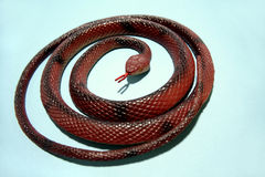 Plastic snake Royalty Free Stock Photography