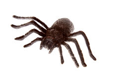 Plastic spider Royalty Free Stock Photography