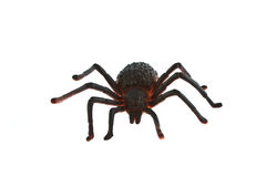 Plastic spider Royalty Free Stock Photos