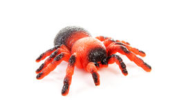 Plastic spider toy Royalty Free Stock Photo
