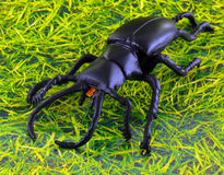 A plastic stag beetle Royalty Free Stock Photo