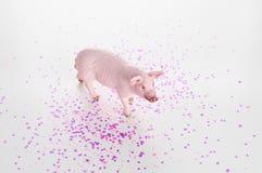 Plastic stuk speelgoed beeldje van een varken op een witte achtergrond royalty-vrije stock afbeelding