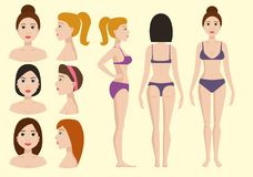 Plastic surgery body parts woman correction anaplasty medicine skin treatment beauty health procedure vector. Illustration. Human patient medical surgeon person Stock Images